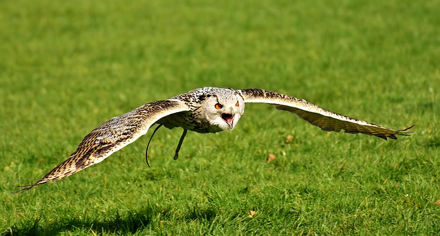 VirtueMart Version Eagle Owl